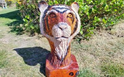 For Sale – Tiger made from Sweet Chestnut 25 inches high – £300